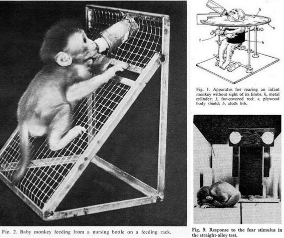 эксперименты Харлоу-14