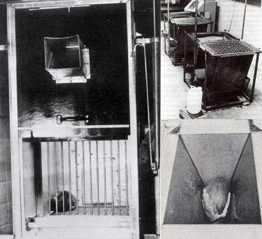 эксперименты Харлоу-15